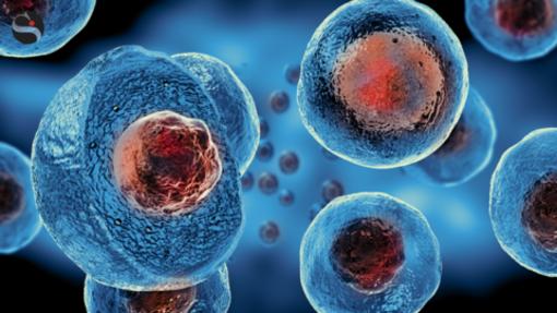 """L'ordine perfetto delle cellule del nostro corpo: uno studio dei ricercatori di Poli e Unito fa luce sui loro meccanismi """"segreti"""""""