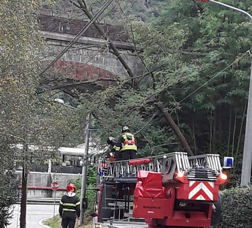 Borgosesia: alberi in bilico sopra la strada, intervenuti i Vigili del Fuoco