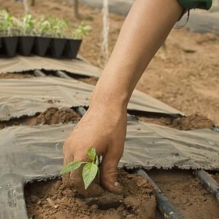 Psr Piemonte, miglioramento delle aziende agricole