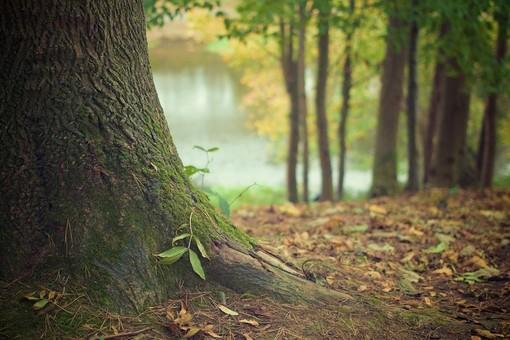 Un albero contro l'omofobia