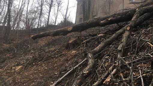 Fase 2, in Piemonte riparte la manutenzione delle foreste e dei boschi