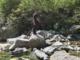 Osso umano rinvenuto sulle rive del torrente Strona