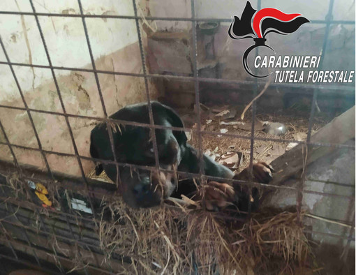 Sporchi, al buio e denutriti: 16 cani salvati dai carabinieri