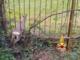 Vercelli, Cappuccini: salvataggio di un capriolo incastrato in un cancello