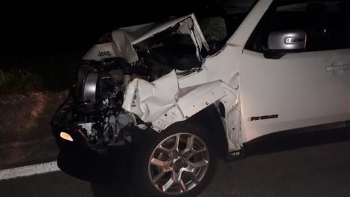 Jeep investe un cervo di 200 chili. L'animale è stato abbattuto a seguito delle ferite riportate FOTO